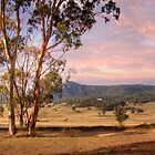 Wineries in Denman - Near Muswellbrook, NSW by Mark Richards