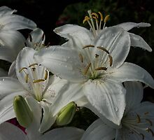 Sparkling White Oriental Lilies After a Rain Shower by Georgia Mizuleva
