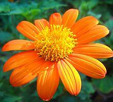 Flower Macro by Vitta