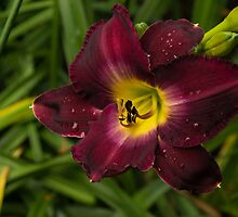 Deep Red Daylily With Raindrops by Georgia Mizuleva