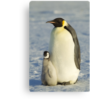Emperor Penguin and ChickTaken at Auster Rookery, Near Mawson Station, Antarctica.  Canvas Print