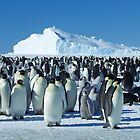 Auster Emperor Penguin Rookery by AndersHamilton