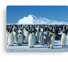 Auster Emperor Penguin Rookery Canvas Print