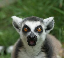 shocked lemur by jessicalena