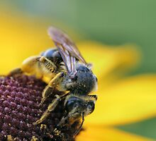 Hard Working Bee by Keala