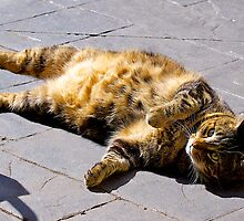 Fat Belly Jimmy Cat. Enjoying the afternoon sun.  by johnrf
