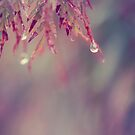 raindrops by karenanderson