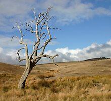 Australian Landscape 1 by jwwallace