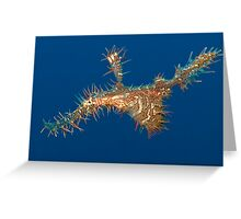 Harlequin ghost pipefish 2 Greeting Card