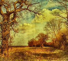 Norfolk Countryside. by JulieCoe