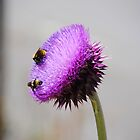 Purple Buzz by Jody Johnson