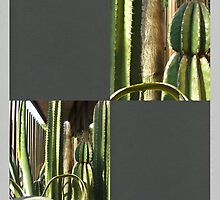 Cactus Garden Blank Q6F0 by Christopher Johnson