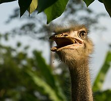 Portrait Of An Opinionated Ostrich  by Georgia Mizuleva