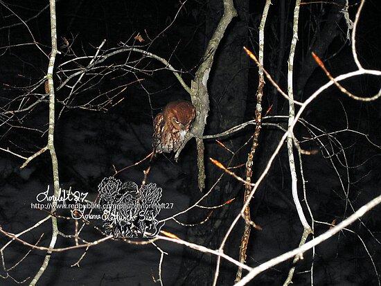 little owl by LoreLeft27