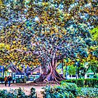 Beautiful Tree in Valencia, Spain by Noam  Kostucki