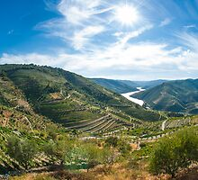 Vineyars in Douro Valley by homydesign