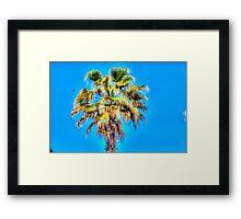 Palm Tree in Malta Framed Print