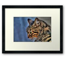 Concentrated Cat in Malta Framed Print