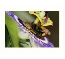 Lunch Time at the Pretty Flower Art Print