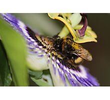 Lunch Time at the Pretty Flower Photographic Print