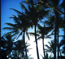 Sunrise Palms by Niki Smallwood