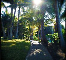 Sunny Path by Niki Smallwood