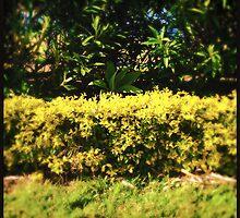 Hedge by Niki Smallwood