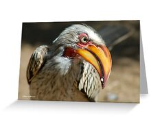 ARE YOU TALKING TO ME? - Southern Yellow-billed Hornbill - Tockus leucomelos - Geelbekneushoringvoel Greeting Card