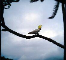 Cockatoo by Niki Smallwood