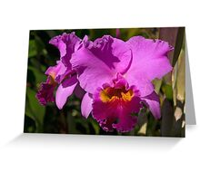 Majestic Pink Cattleya Orchid Bloom Greeting Card