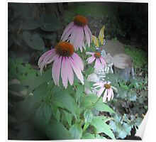 Coneflower in Its Glory Poster