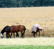 my neigh......bours horses by margaret hanks