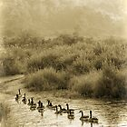 Canadian Geese in a Row sepia nature photography by jemvistaprint