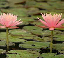 Lily Twins by karina5