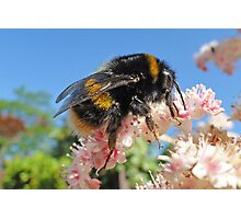 Bee - A Buzzing Thing Photographic Print
