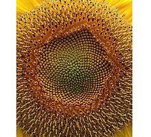 Yellow Flower by emperorBear