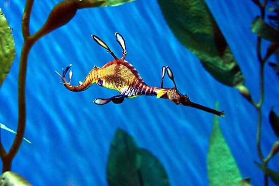 Sea Dragon by Loree McComb