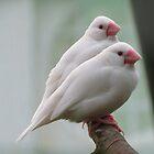 Birds by caitlin2005