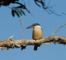 Kingfisher Colour by byronbackyard