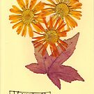 Marigold & Acer Anniversary card by Greybeard