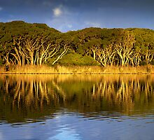 The other side - Anglesea by Hans Kawitzki