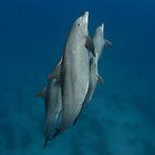 Dolphins in a pod by Natalia Pryanishnikova