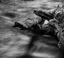 Lyre River No. 5, Olympic Peninsula, Washington, July 2013 by Steve G. Bisig