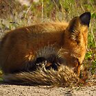 foxy naptime by Alex Call