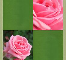Pink Roses in Anzures 2 Blank Q5F0 by Christopher Johnson