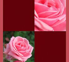 Pink Roses in Anzures 2 Blank Q10F0 by Christopher Johnson