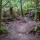 Tahune Glade - Huon Valley, Tasmania by clickedbynic