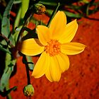 Red Centre Flower by D-GaP