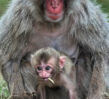 Babies put everything in their mouths by Fraser Ross