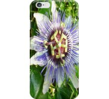Passiflora Against Green Foliage In A Garden iPhone Case/Skin